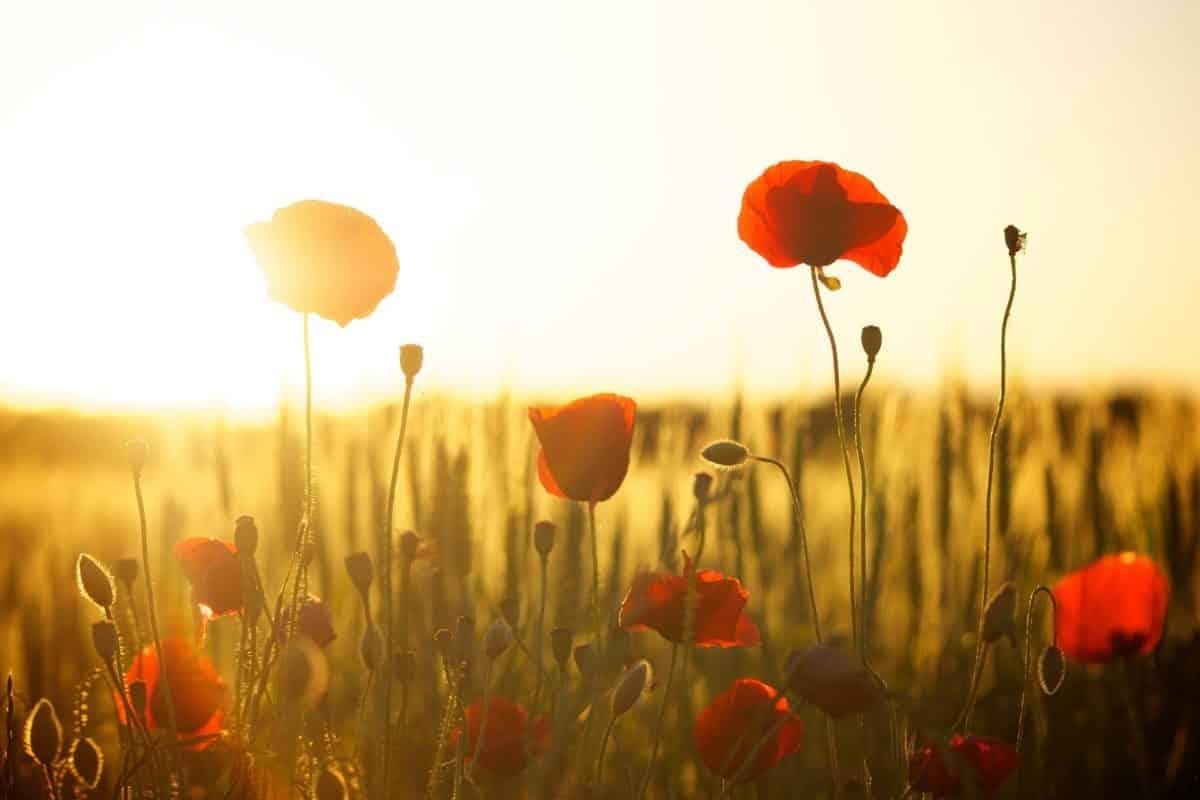 Wiosenny zawrót głowy - jaki zapach wybrać na wiosnę? 1